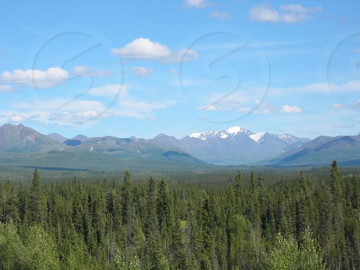Alaska Mountains forest photo