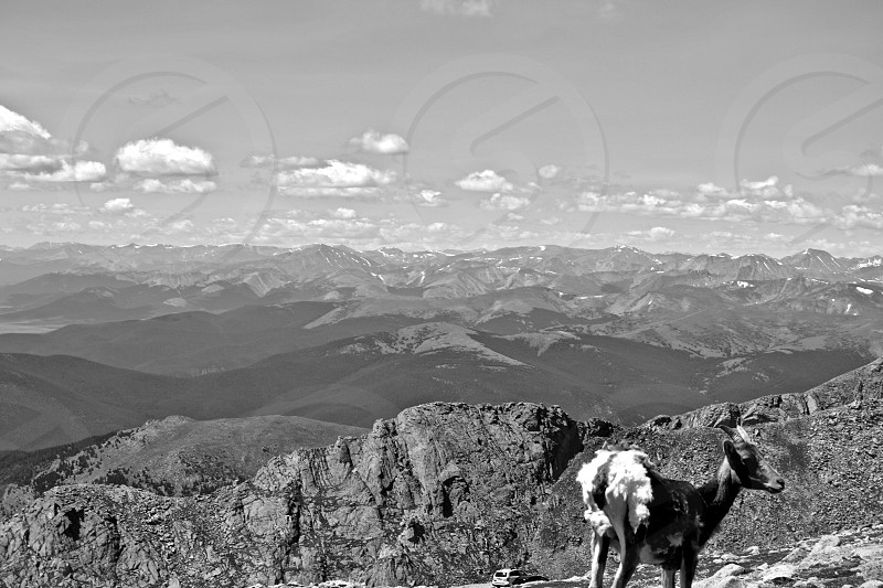 grayscale photo of animal near folding mountain at daytime photo