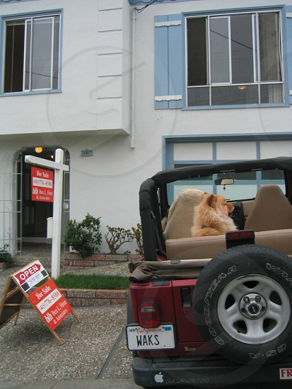 moving to first home in san francisco jeep chow for sale sold photo