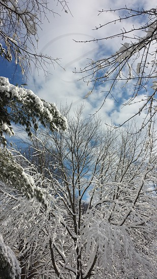 After a snow storm. photo