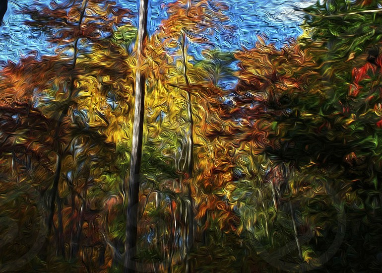 """Vincent's Forest"" Photoshop ""painted"" version of fall leaves on the Noland Trail Newport News Virginia  photo"