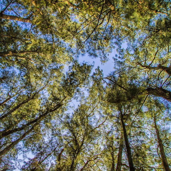 treesnature background textures sky photo