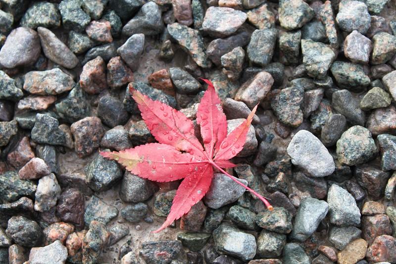 Autumn leaf on stones photo