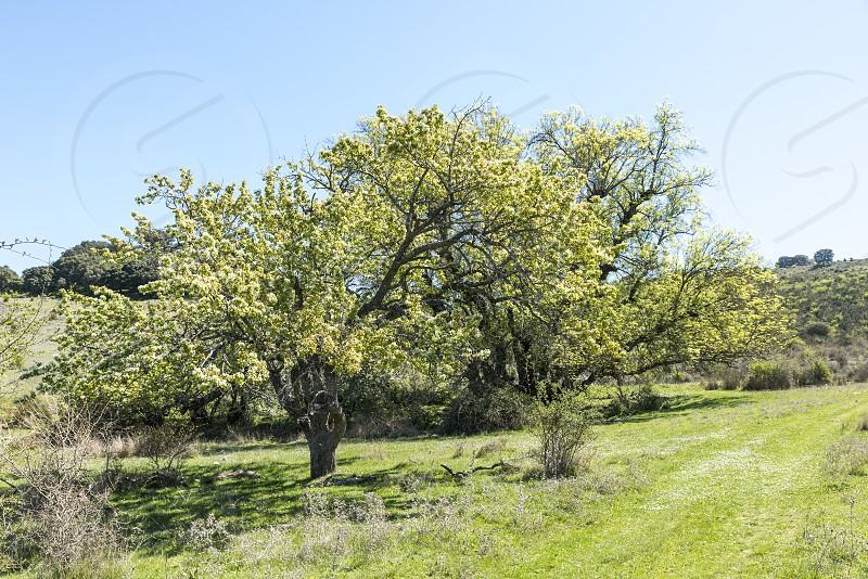 Sierras Subbéticas Natural Park in andalusia near zuheros with flowering blossom trees photo