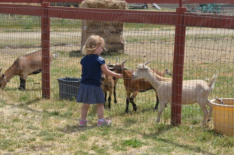 Childhood farm lifestyle goats photo