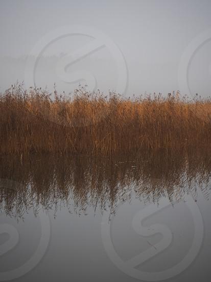 Symmetry symmetric nature fog foggy mist misty fall autumn water reflection reed photo