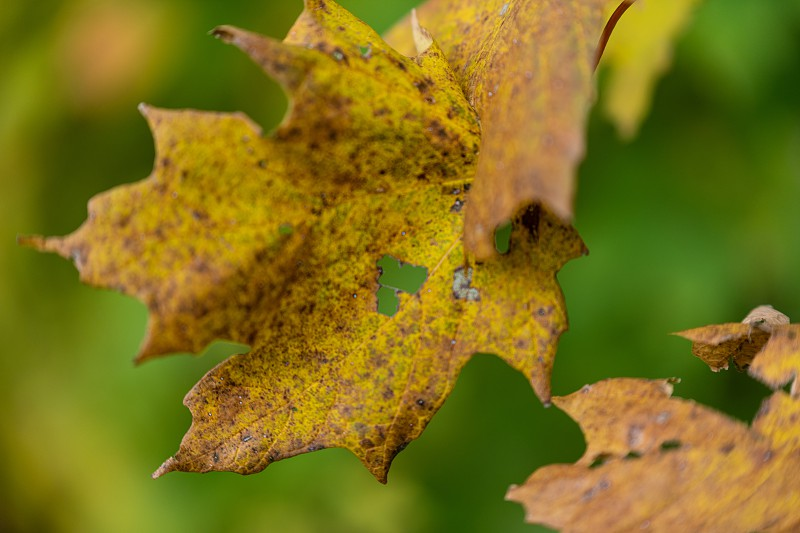Spotting hearts in nature during a fall walk through the UW Arboretum photo