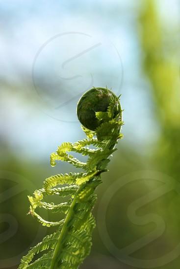 green fern photo