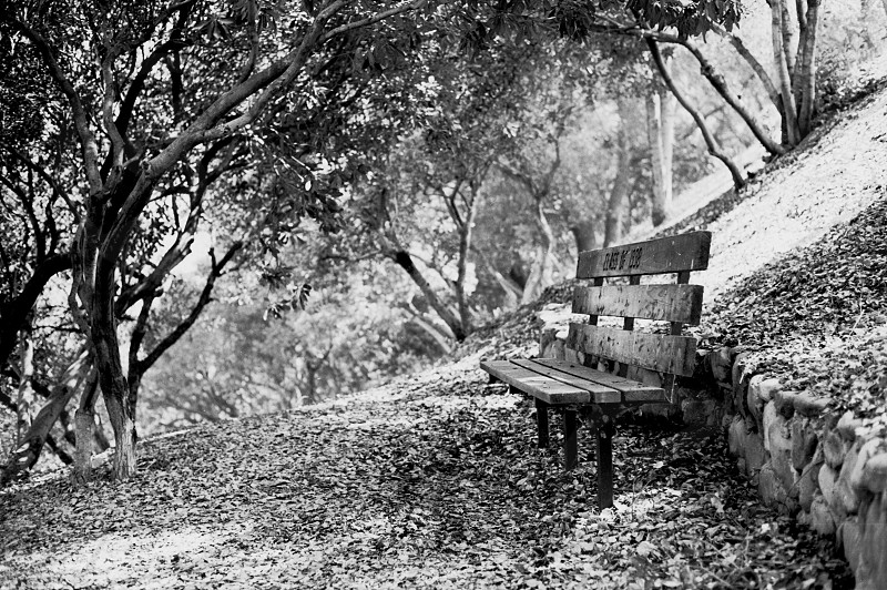 bench under the trees grayscale photography  photo