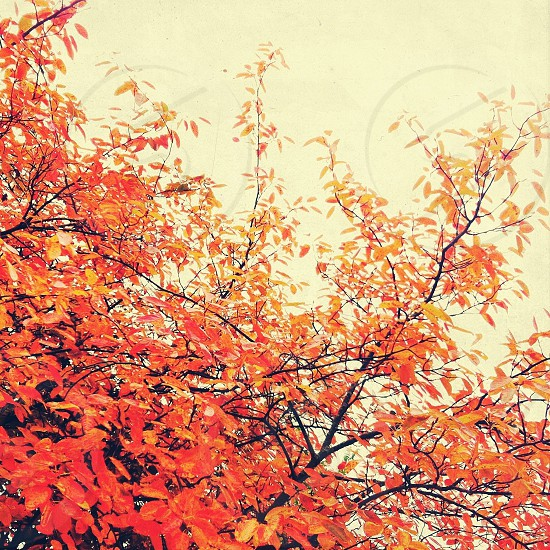 red and yellow leaves on tree photo