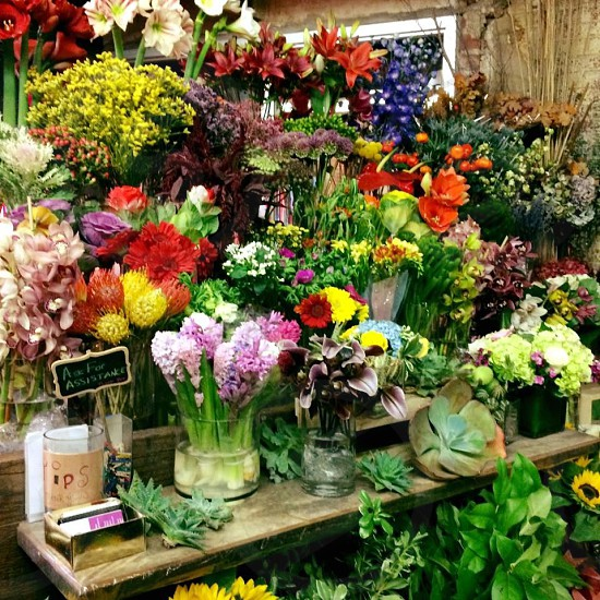 Flowers spring colorful flowers different varieties  photo