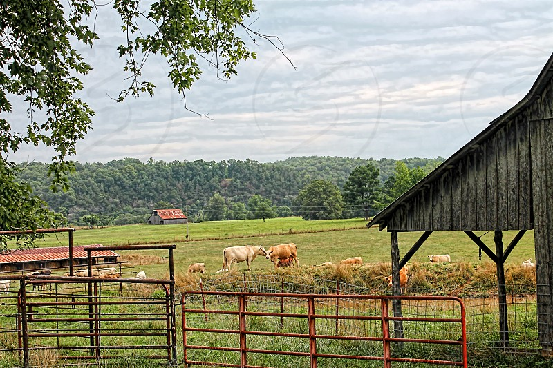 Distance view of a farmland with cows barn detail and a metal fence.  photo