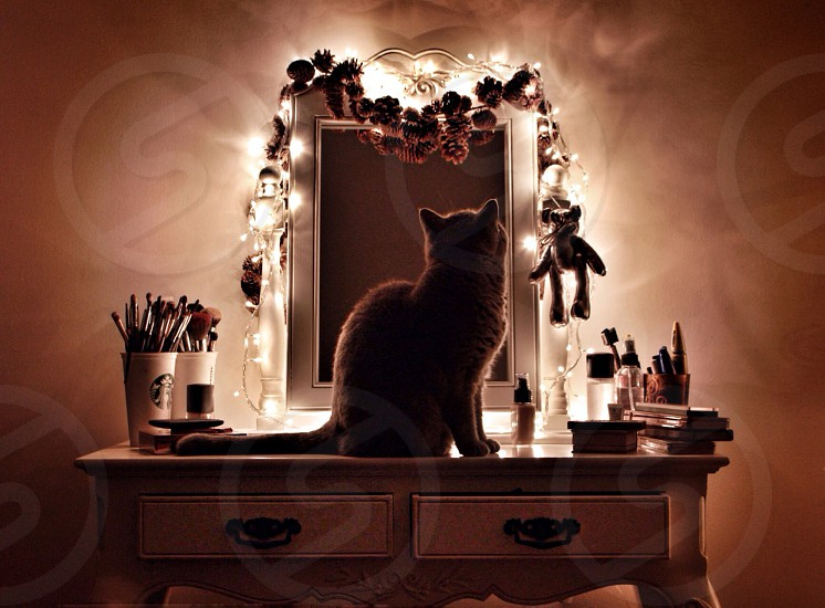 Christmas cat home interior decoration animal photo