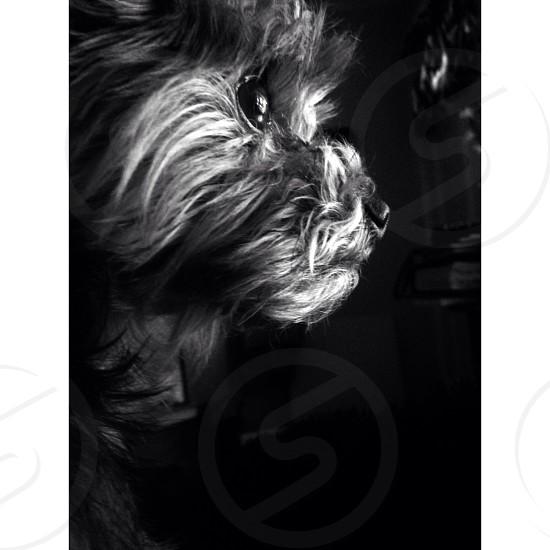 black and white dog photo photo