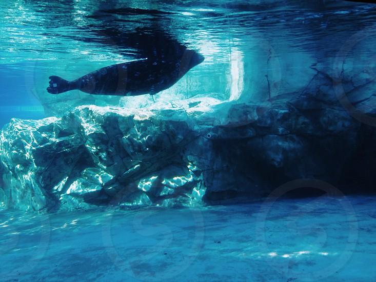 fish on ocean underwater photography  photo