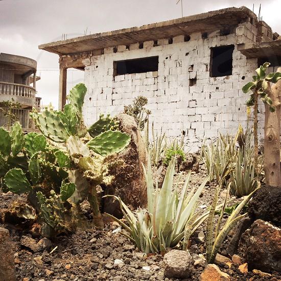 landschape house cactus garden photo