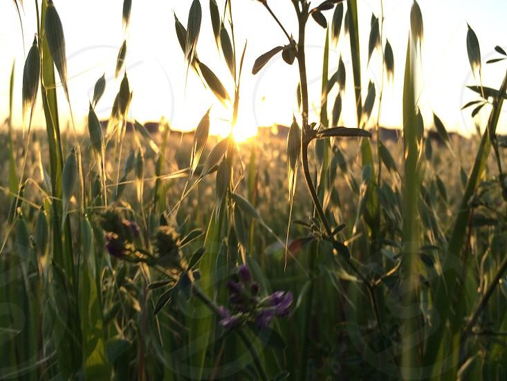 green grass field photography photo