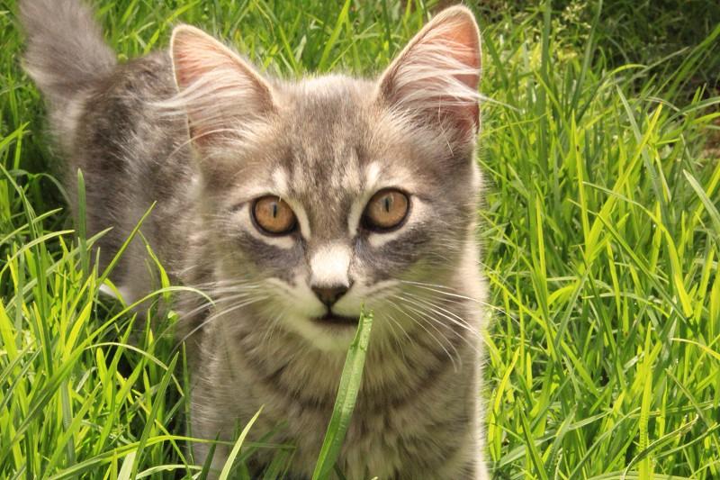 Wild kitty  photo