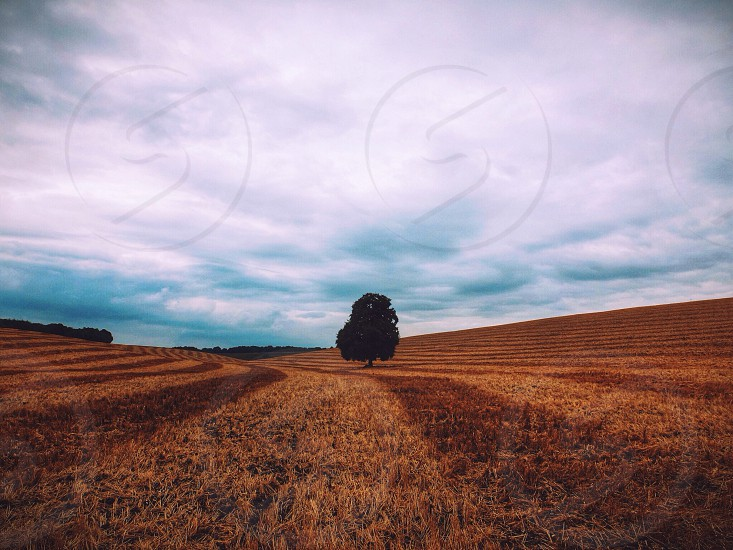 Argyle - High + vignette  photo