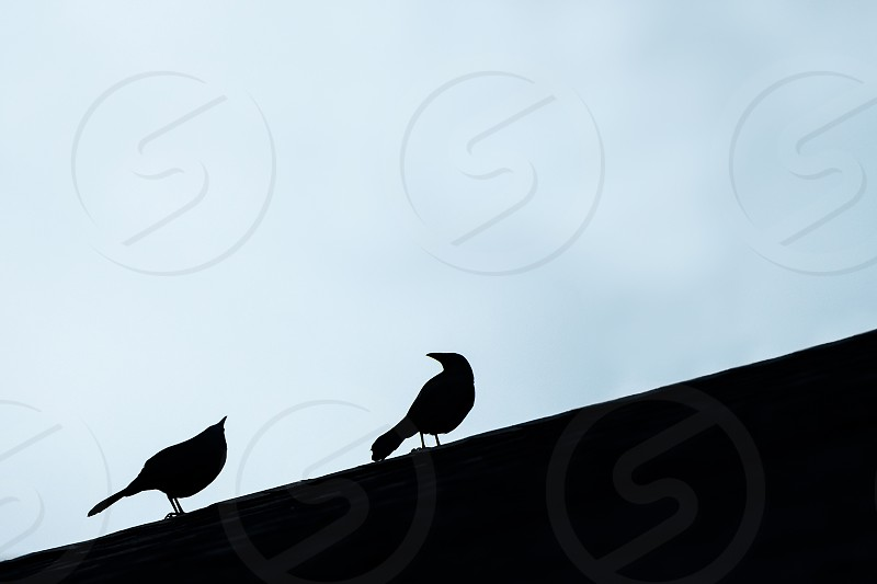 Silhouette of two birds on a roof. photo