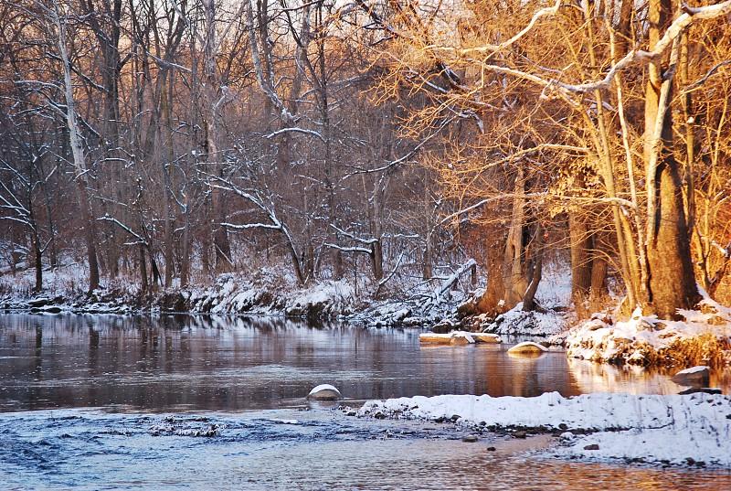 Winter's Golden Light photo