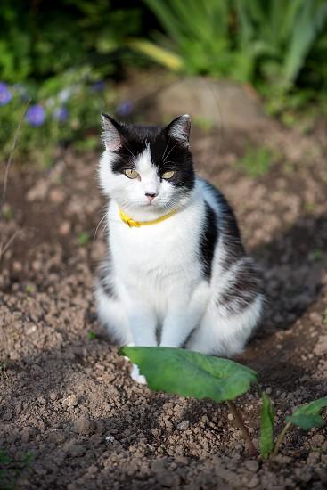 Domestic cat in the garden photo