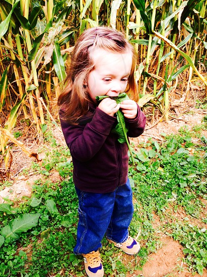 girl wearing maroon jacket and blue jeans standing near green and brown corn stalks photo