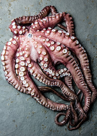 Seafood octopus. Whole fresh raw octopus on gray slate background top view. photo