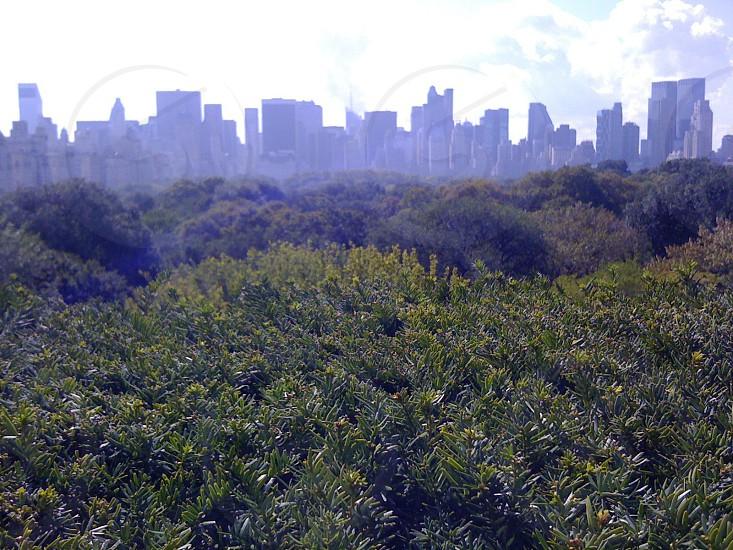 green trees at daytime photo