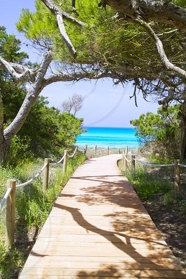 beach way to Illetas paradise beach Formentera Balearic islands photo