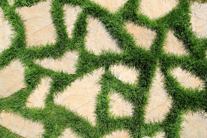 stone path in green grass garden texture elevated view photo