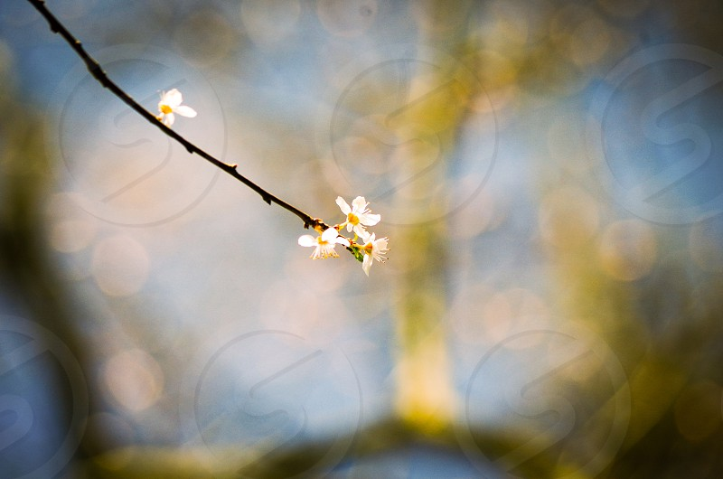 Blossom ventures into Spring's warmth  photo
