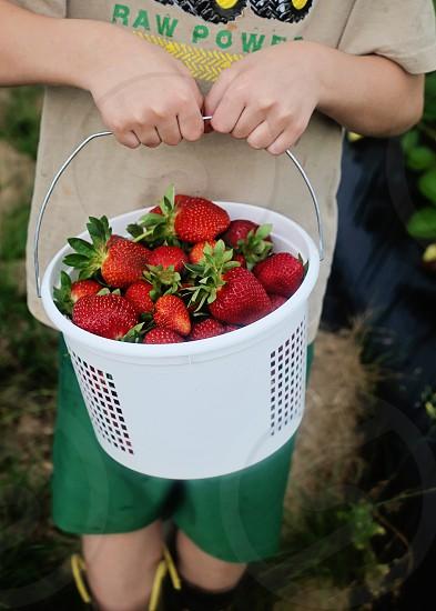 strawberry on white plastic bucket photo