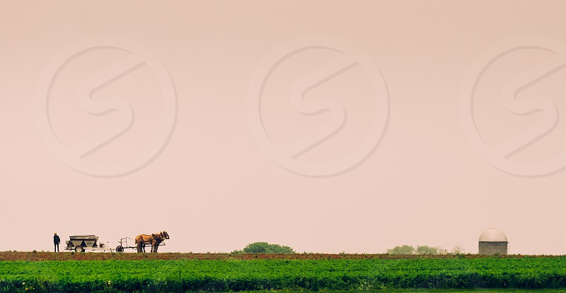 Amish farmer photo