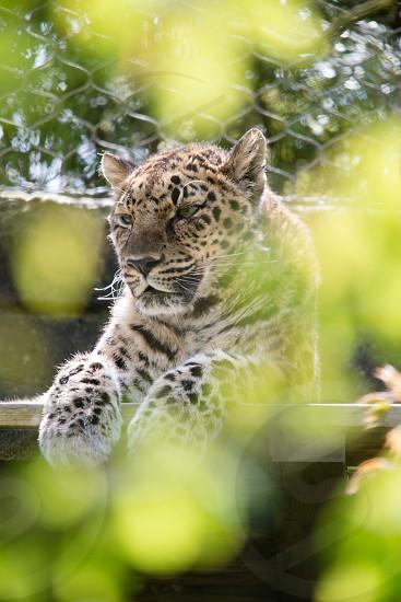 Wildlife 22 photo
