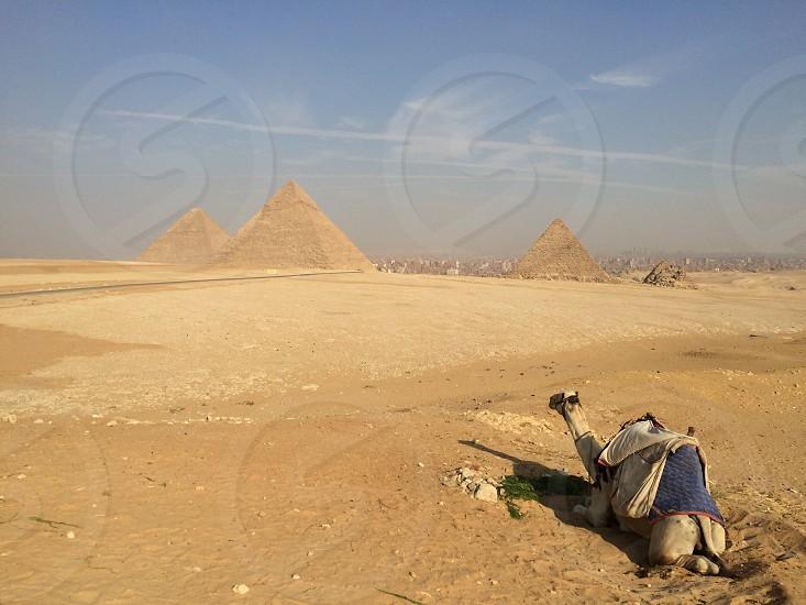 Giza pyramids egypt camel photo