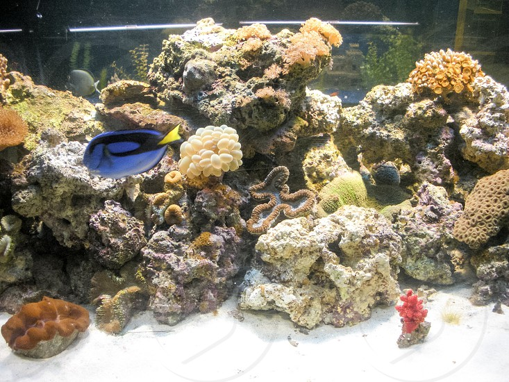 Saltwater aquarium with live rock sand corals invertebrates and fish. Ocean sea living sea background backdrop wallpaper  photo