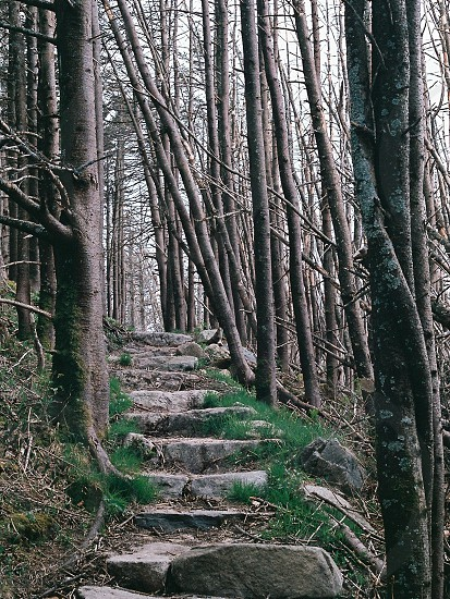 gray concrete stairs in the forest photo