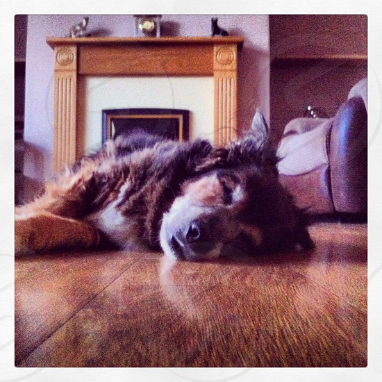 My old pooch Lady having a snooze. photo