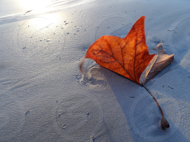 brown maple leaf on sea shore photo
