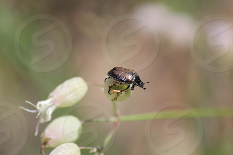 Bug flower nature beetle photo