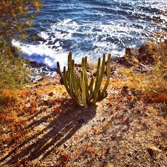 nature flora plant plants cactus ocean shadow sun coast sunlight day walk travel grow one outdoors object alone water blue color green  photo