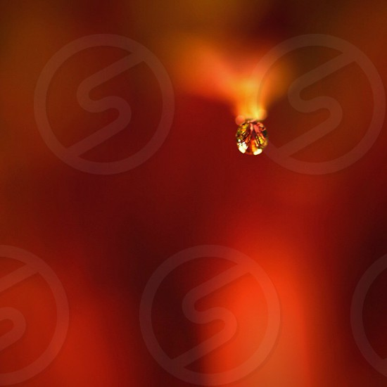 dew drop with red background photo