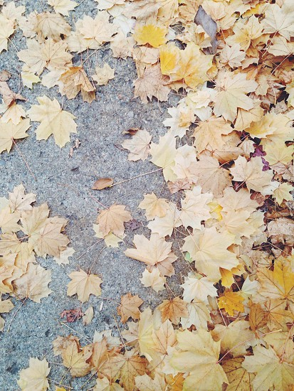 brown dried leaves on the floor photo