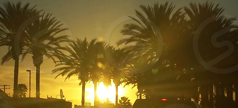silhouette photography of palm trees photo