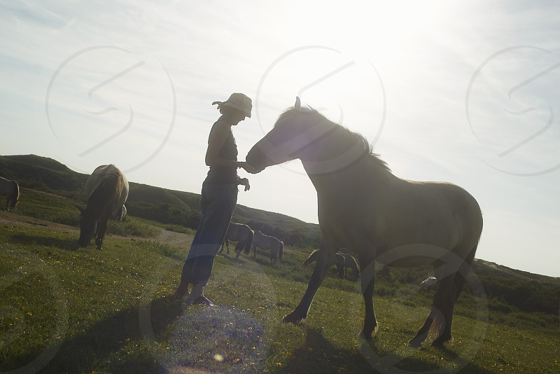 A woman stroking the head of a wild horse on a wide open space in summer sunshine photo