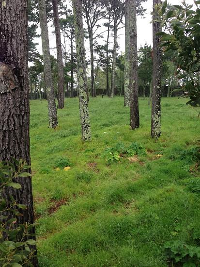 Sherwood Forest.  photo