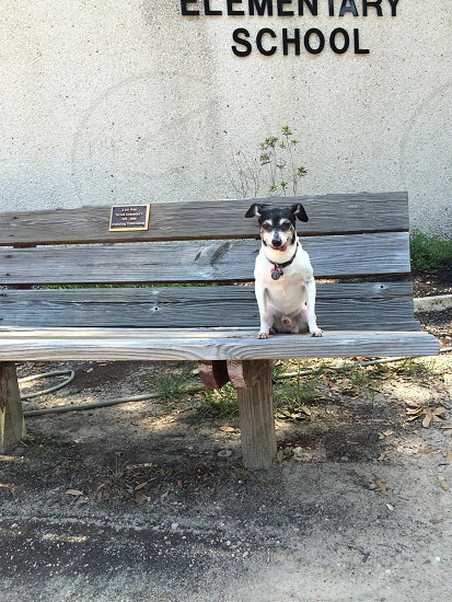 My rescue pup sitting on a school bench waiting photo