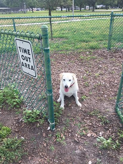 Dog park lab yard  photo