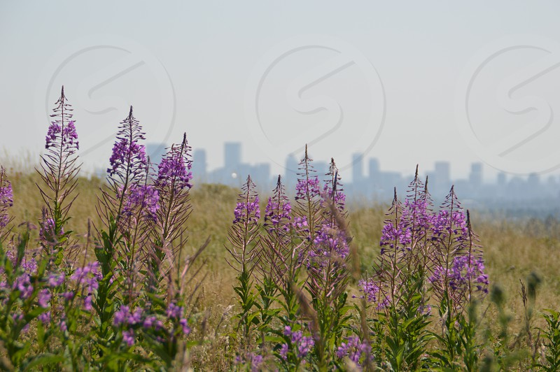 City of Calgary from Nose Hill Park photo